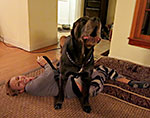 Zuzka_vs_Cane_corso_featured